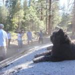 Mono Hot Springs Martial-Arts Camp 2014