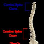 martial-arts-spine-straightening-flattening